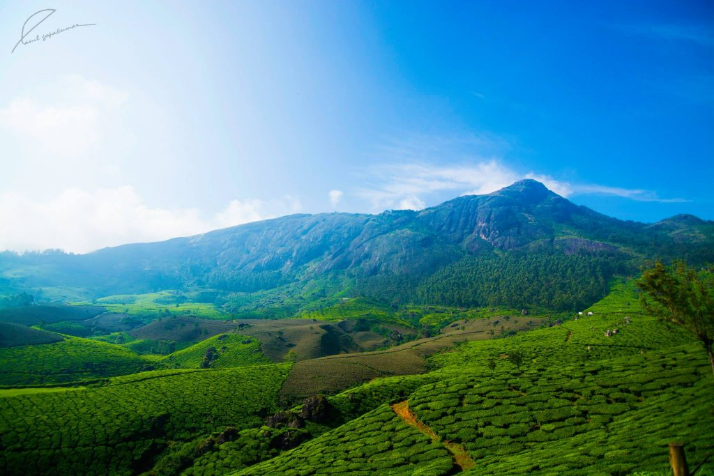Devikulam-1-Most-Popular-Hill-Stations-in-South-India